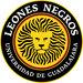 Club logo Leones Negros